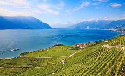 Terraced swiss vineyards